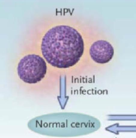 HPV-01